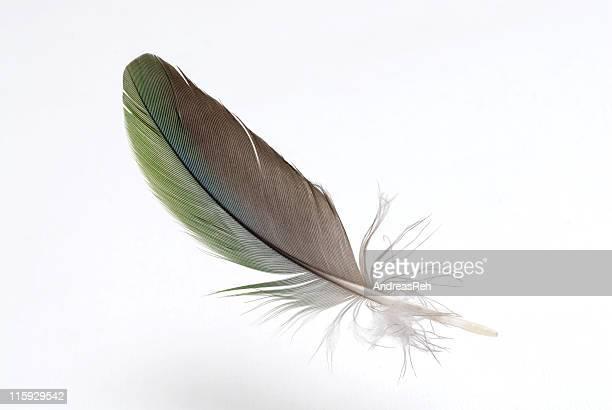 Aérée levitate coloré de plumes