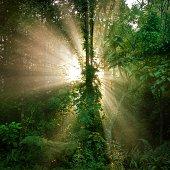 Aisia tropical rain forest