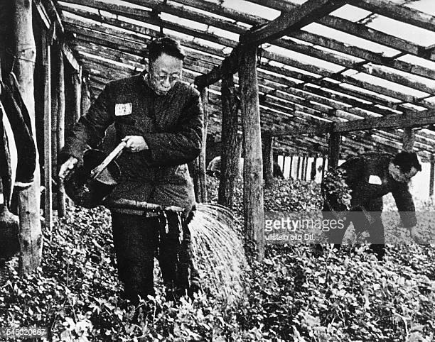 Aisin Giorro Pu Yi *190812 Kaiser Hsuang Tung von China193234 Regent 193445 Kaiser von Mandschukuo bei der Arbeit als Gärtnergehilfein RotChina60er...