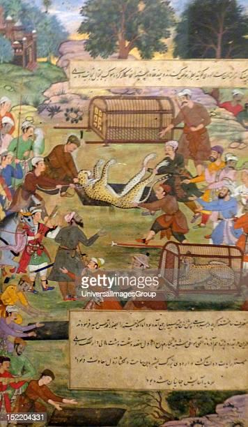 Akbar lifting captured cheetahs From the Akbarnama Comparison by Tulsi painting by Narayan