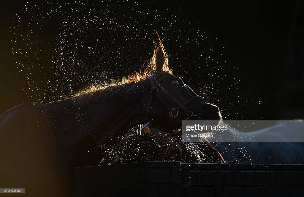 Akzar from the Darren Weir stable is hosed down after Race 10 during Grand Annual Day at Warrnambool Race Club on May 5, 2016 in Warrnambool, Australia.