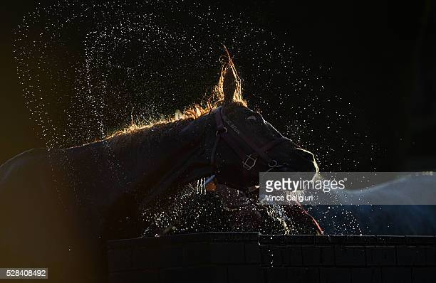 Akzar from the Darren Weir stable is hosed down after Race 10 during Grand Annual Day at Warrnambool Race Club on May 5 2016 in Warrnambool Australia