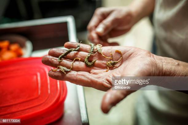 Alacran or scorpion edible insect