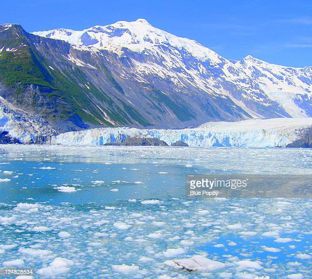 Alaska Tidewater Glacier 1