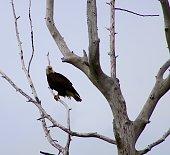 Girdwood Alaska Wildlife Center