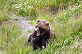 Girdwood Alaska Wildlife Refuge