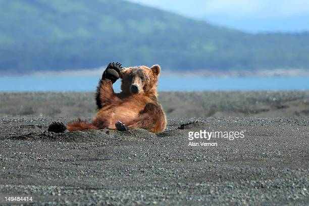 Alaskan Coastal Brown bear waving
