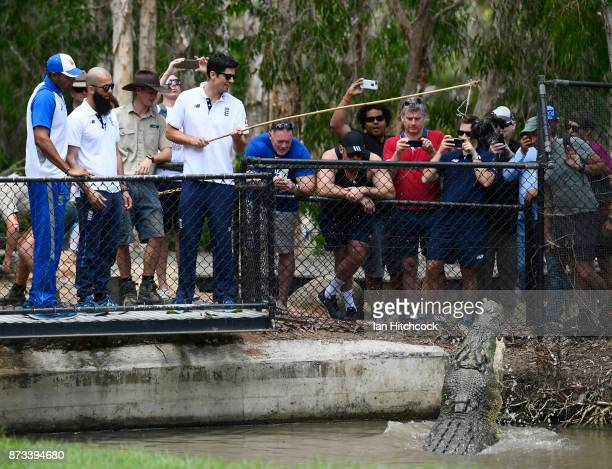 Alastair Cook and Moeen Ali of England feed a crocodile during the England media opportunity on November 13 2017 at Billabong Sanctuary in Townsville...