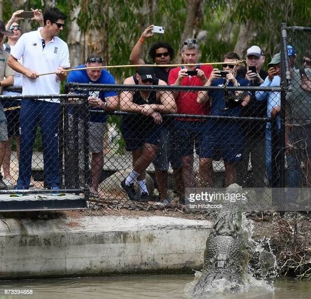 Alastair Cook of England feeds a crocodile during the England media opportunity on November 13 2017 at Billabong Sanctuary in Townsville Australia