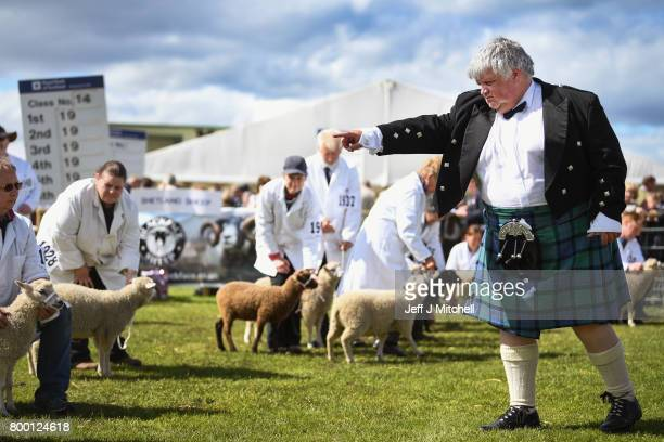 Alastair Wilson from Somerside Farm Newmains judges lambs at the Royal Highland show on June 23 2017 in Edinburgh Scotland The Royal Highland Show is...