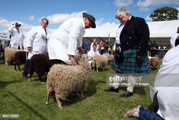 Alastair Wilson from Summerside Farm in Newmains judges sheep in the show ring during the Royal Highland Show in Edinburgh