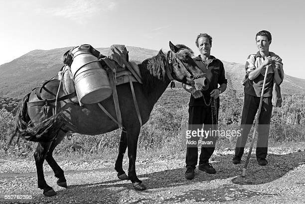 Albania, Lukove, horse carrying milk