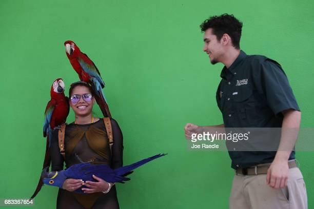 Alberta Washington with the help of bird handler Kenneth Gonzalez interacts with parrots at Jungle Island as Florida Governor Rick Scott announces...