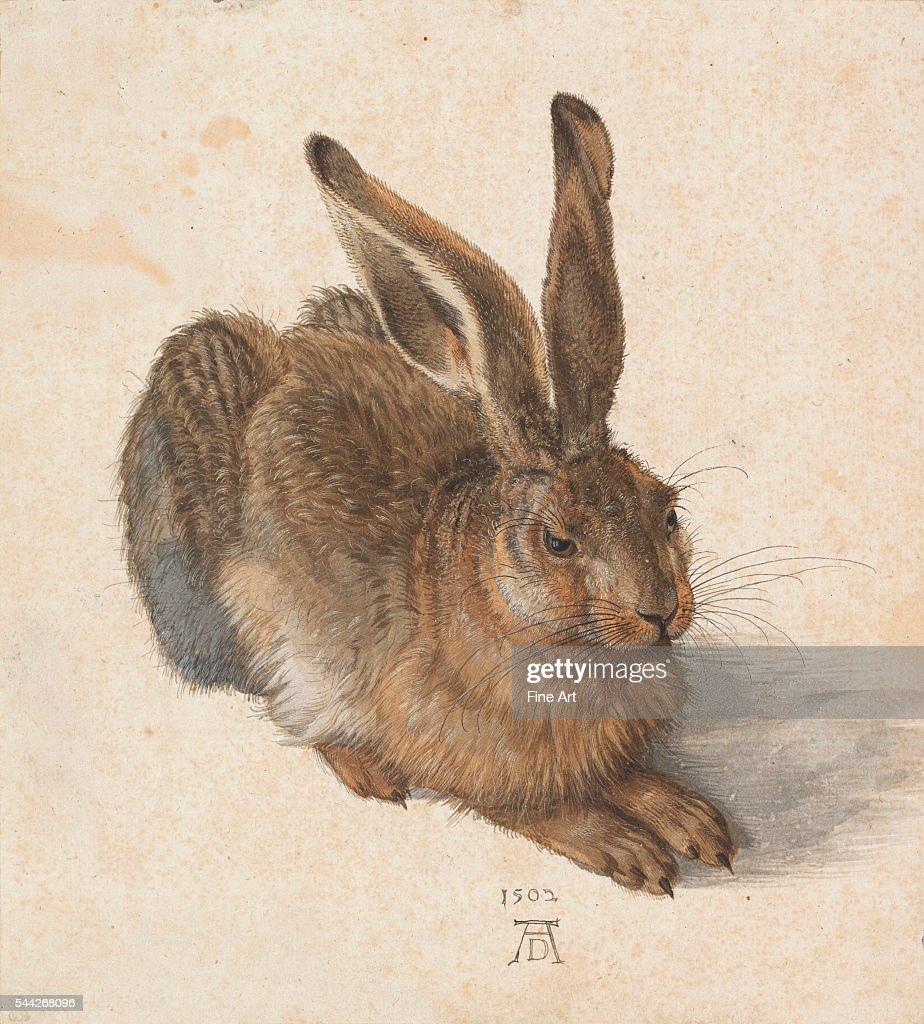 Albrecht Dürer (German, 1471–1528), Hare, 1502, watercolor and gouache, Albertina Museum, Vienna, Austria