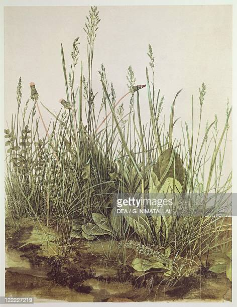 Albrecht Dürer The Corner of the Meadow or The Large Clod of Grass watercolor and tempera on paper mounted on cardboard3x3110 cm Detail