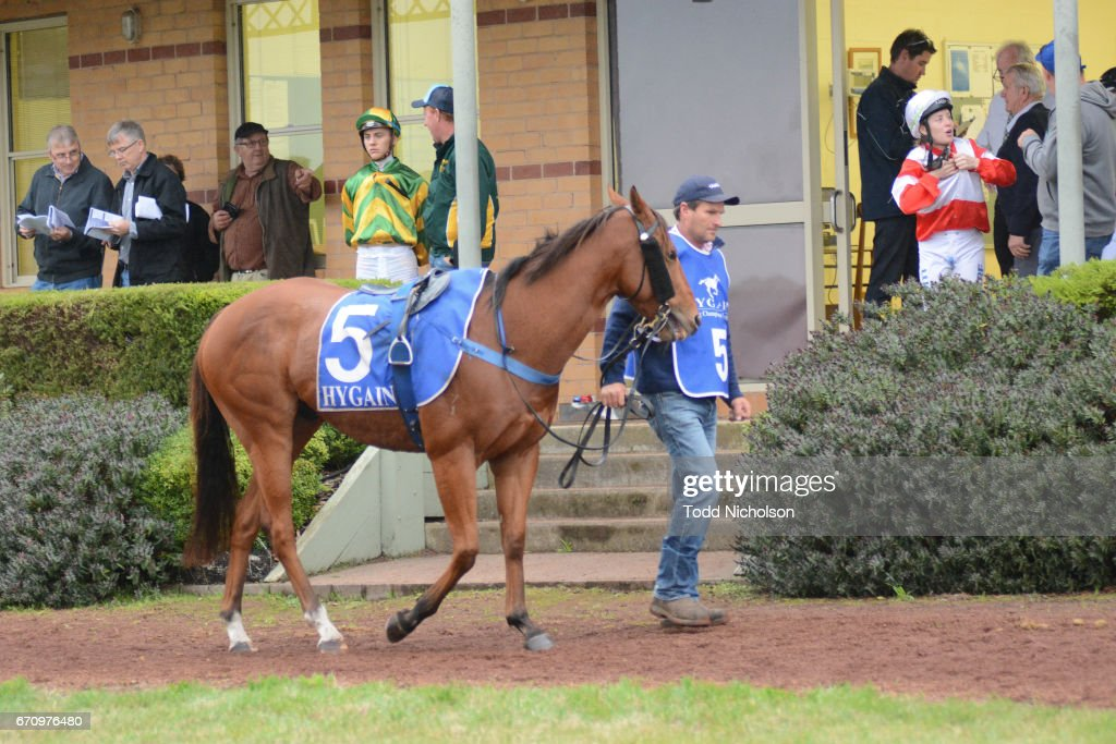 Aldo's Gold parades before Hamilton Flooring Xtra BM58 Handicap at Hamilton Racecourse on April 21, 2017 in Hamilton, Australia.