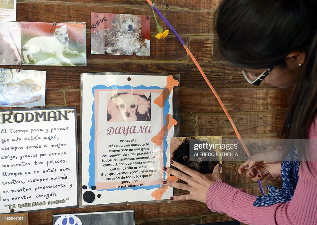 Alejandra del Castillo pastes a picture of her dog at the pet cemetery in Corregidora, State of Queretaro, Mexico on November 2, 2013 during the commemoration of the Day of the Dead. The traditional Mexican holiday honors the dead and is celebrated annually.
