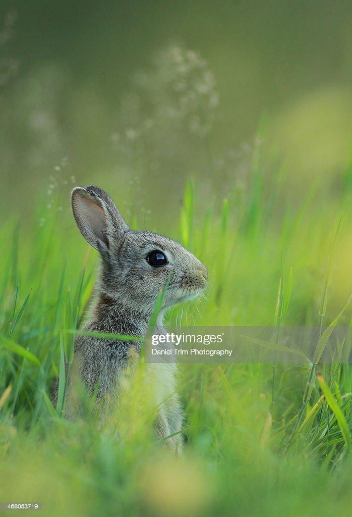 Alert Rabbit Kit