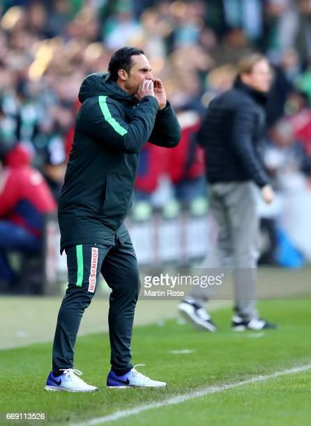 Alexander Nouri head coach of Bremen reacts during the Bundesliga match between Werder Bremen and Hamburger SV at Weserstadion on April 16 2017 in...