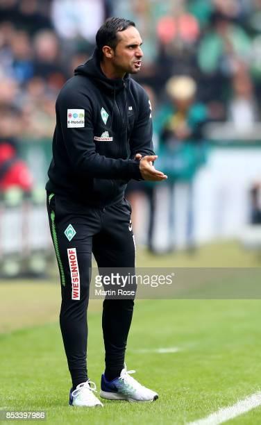 Alexander Nouri head coach of Bremen reacts during the Bundesliga match between SV Werder Bremen and SportClub Freiburg at Weserstadion on September...