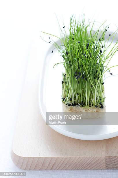 Alfalfa sprouts on dish, close-up