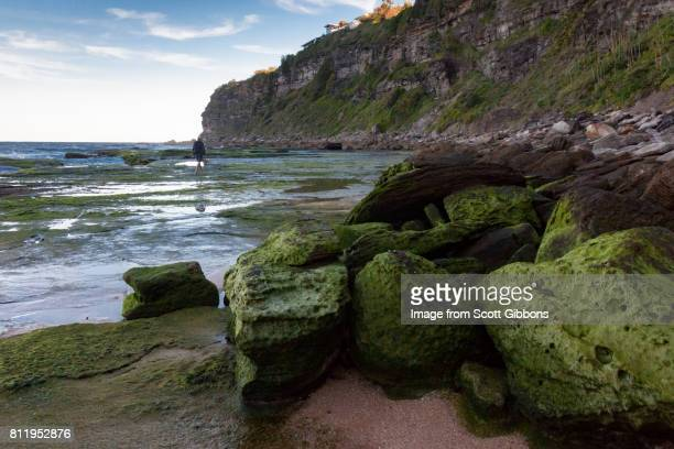 Algae Covered Rocks