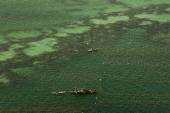 Algae cultivation in PalawanIn the 60s a USprocessing seaweed has a contract to supply raw material of the algea Eucheuma in the Philippines for the...