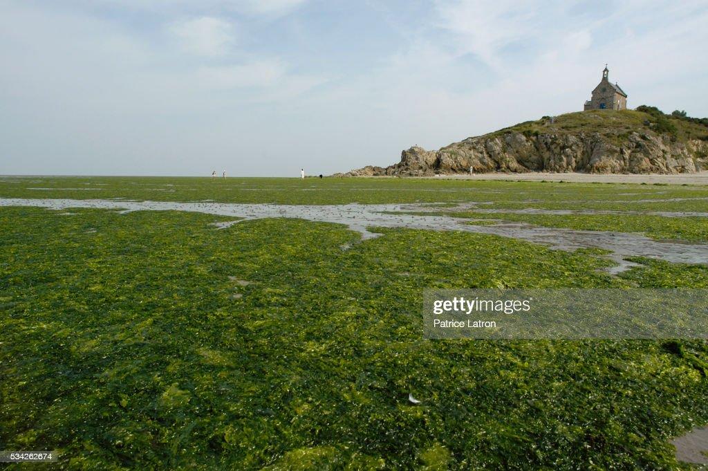 Algae in High Tide