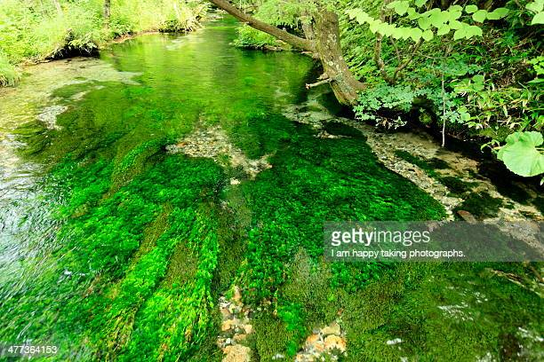 Algae in the river.