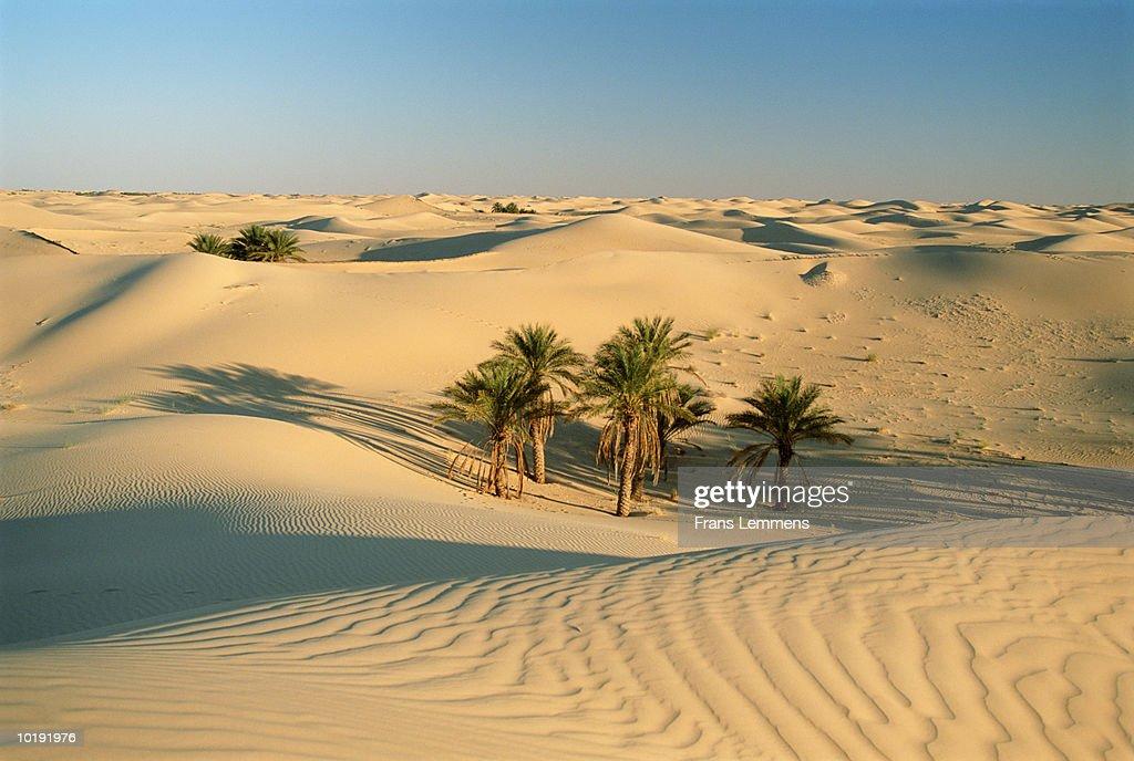 Algeria, Sahara Desert, Eastern sea of sand : Stock Photo