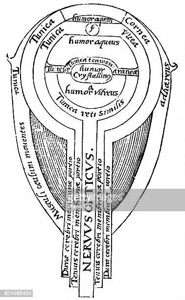 Alhazen c965c1040 Arab mathematician Anatomy of the eye from illustration from an edition of Alhazen 'Optica thesaurus' 1572 Woodcut Basel