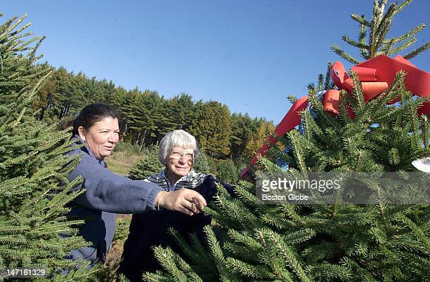 Christmas Tree Inn Nh