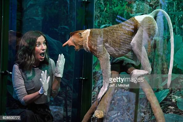 Alice Wyllie views a Proboscis monkey during a press preview for a new taxidermy exhibition on December 8 2016 in Edinburgh Scotland More than sixty...