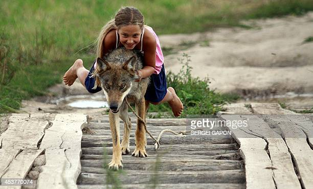 Alisa a daughter of a local gamekeeper Oleg Selekh plays with a tame wolf in the village of Zacherevye some 250 kms north from Minsk on August 17...