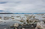 Alkali flies at Mono Lake