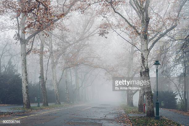 Alley bordered with partly bare trees in park on misty autumn morning