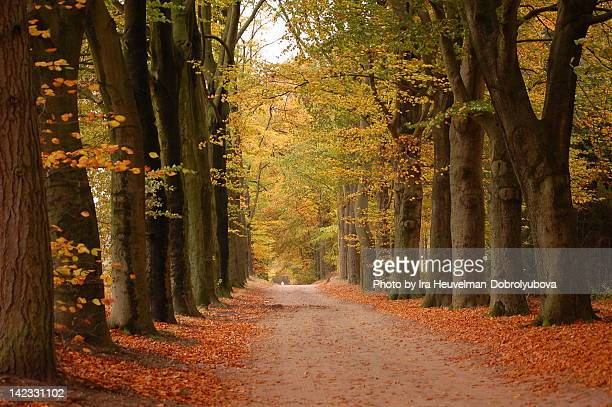 Alley of trees in autumn forest