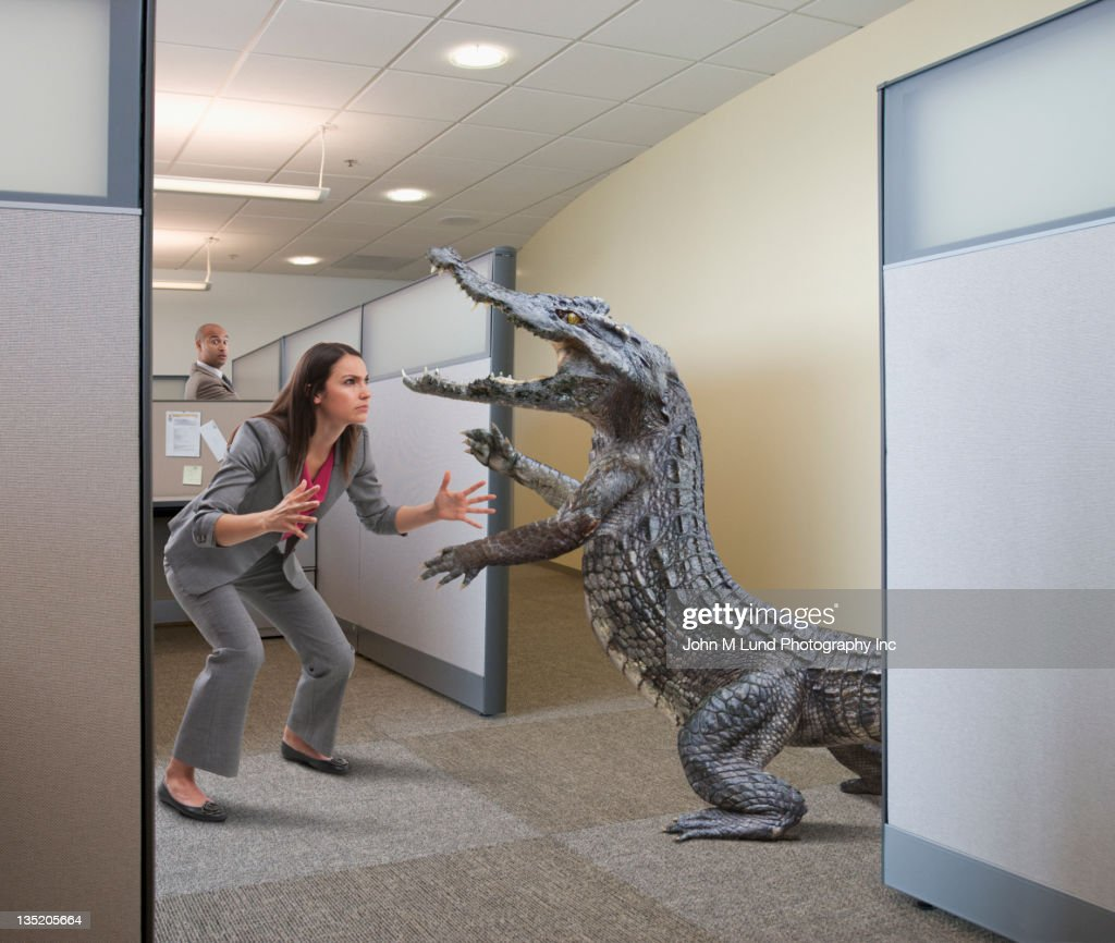 Alligator attacking businesswoman in office cubicle : Stock Photo