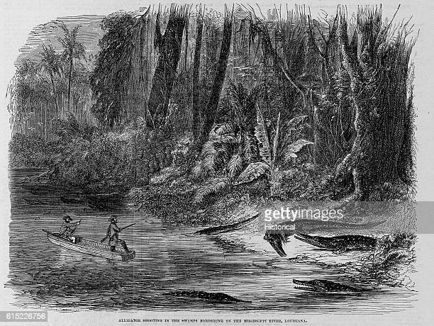 Alligator Shooting in the Swamps Bordering on the Mississippi River Louisiana Illustration
