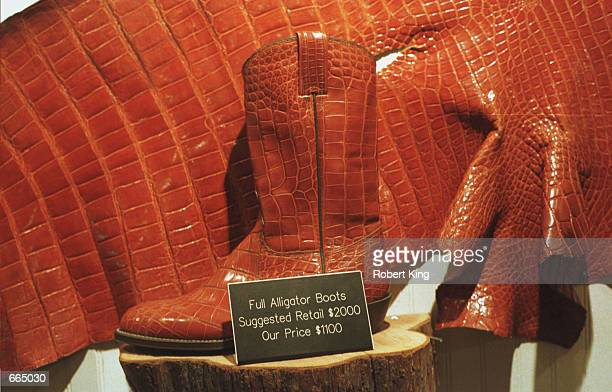 Alligator skin boots are sold at the Gator Land gift shop June 24 2000 in Orlando FL