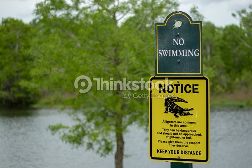 alligator warning sign stock photo thinkstock
