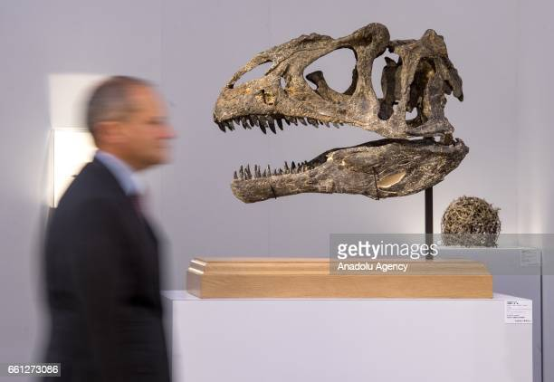 Allosaurus Skull on show during Sotheby's Hong Kong Spring sale preview at the Hong Kong Convention and exhibition centre in Hong Kong on March 17...