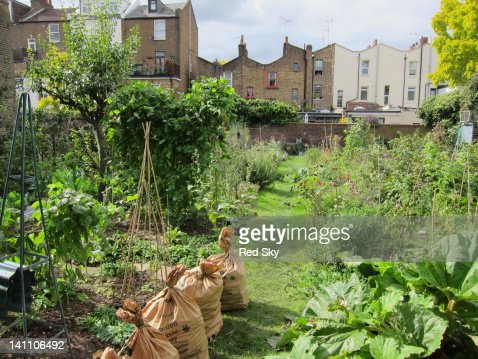 Allotment in urban landscape