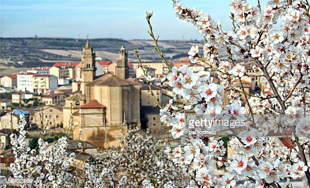 Almendros en flor en Elciego