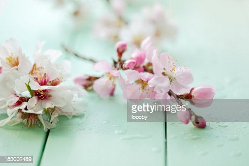 almond blossom still life : Stock Photo