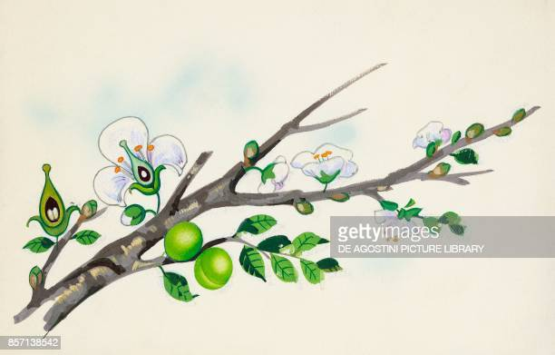 branch with flowers and fruit drawing