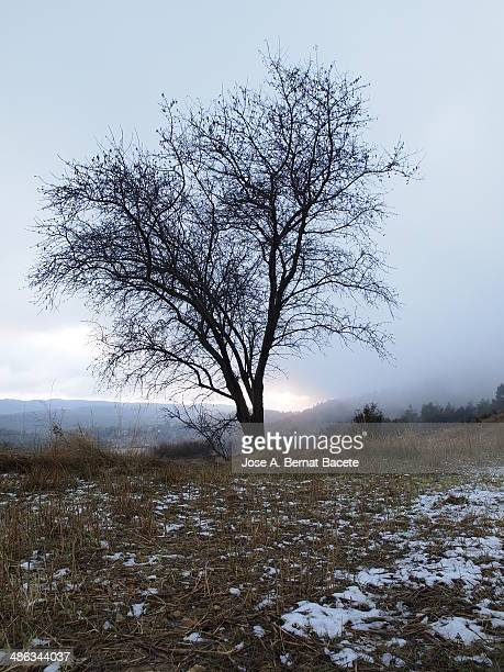 Almond in a field of snowy mountain with fog