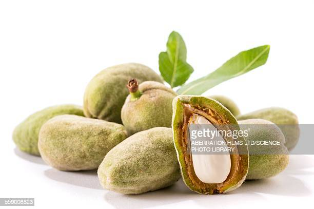 Almond in its shell