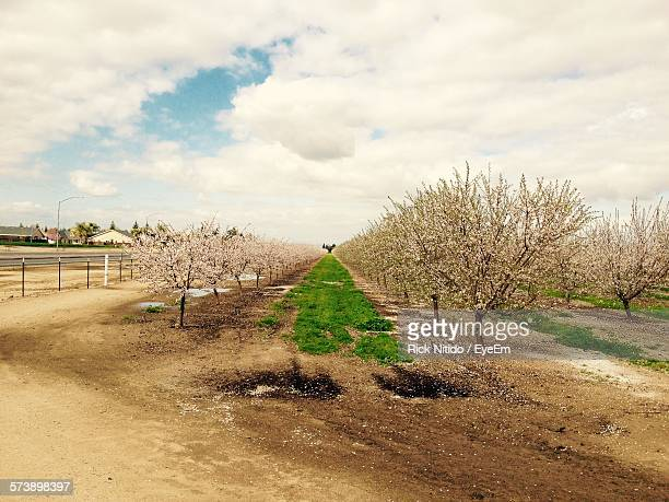 Almond Trees Growing On Field Against Cloudy Sky