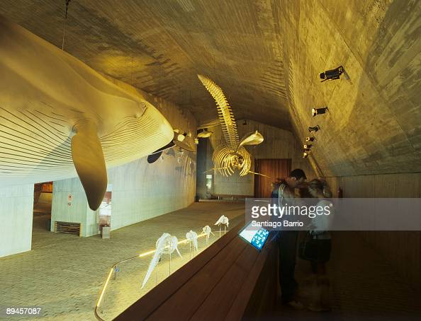 Almonte Huelva Museum of the Marine World In the image a whale